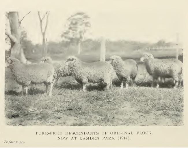 Image Result For Australian Sheep Farm
